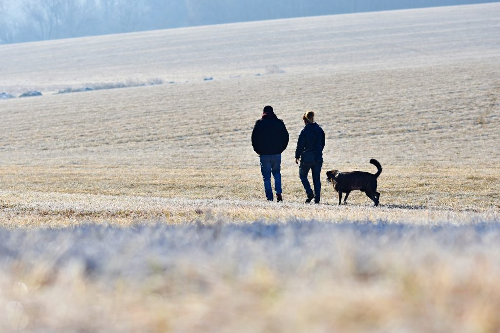 Walking the dog. Beautiful winter seasonal background in nature.